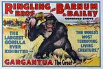 Barnum & Bailey Largest Gorilla ever Exhibited Poster