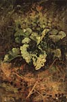 Burdock. End of 1880. Shishkin, Ivan Ivanovich