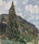 The old Spruce in Bad Gastein