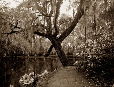 The Lake, Magnolia-on-the-Ashley, Spanish Moss Charleston 1907